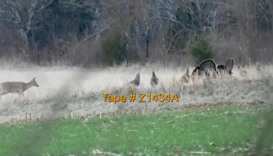 Tape # Z1434A